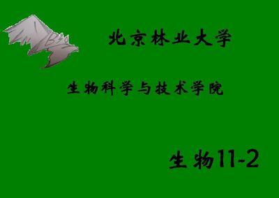 十一班班旗设计