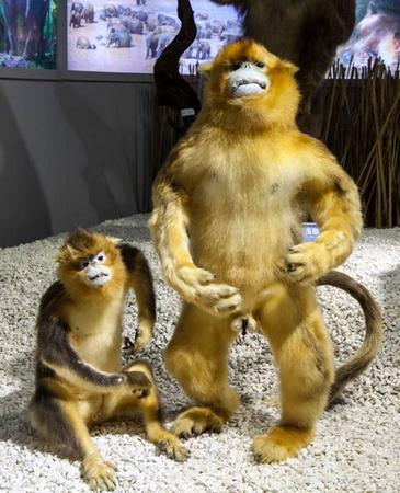 校庆专题:标本馆哺乳动物展示有特色