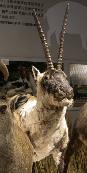 北京动物园捐赠
