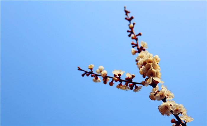 鹫峰的春天1