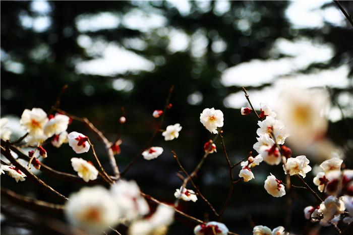 鹫峰的春天2