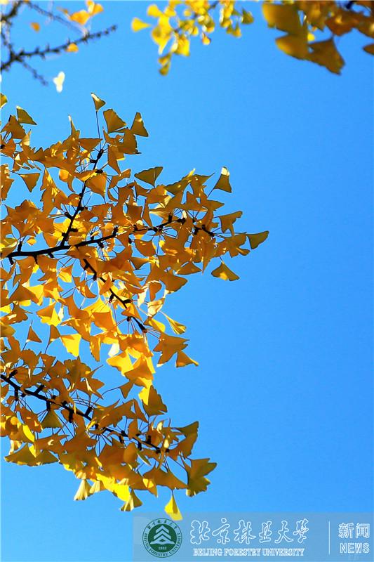 北林的秋天1