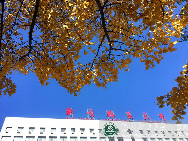 北林的秋天3